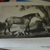 cheval_deauville.jpg